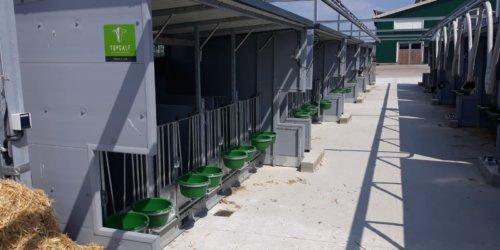 Le logement des veaux avec système d'alimentation automatique