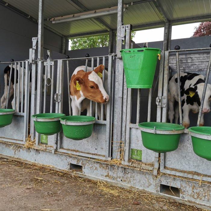 Serie (5): Op bezoek bij – Melkveebedrijf Albers